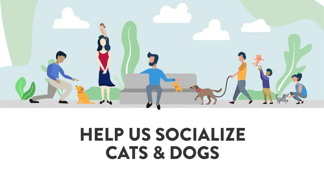 THE SOCIAL NETWORK FOR PETCARE